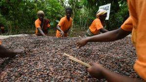 CACAO AFRICA